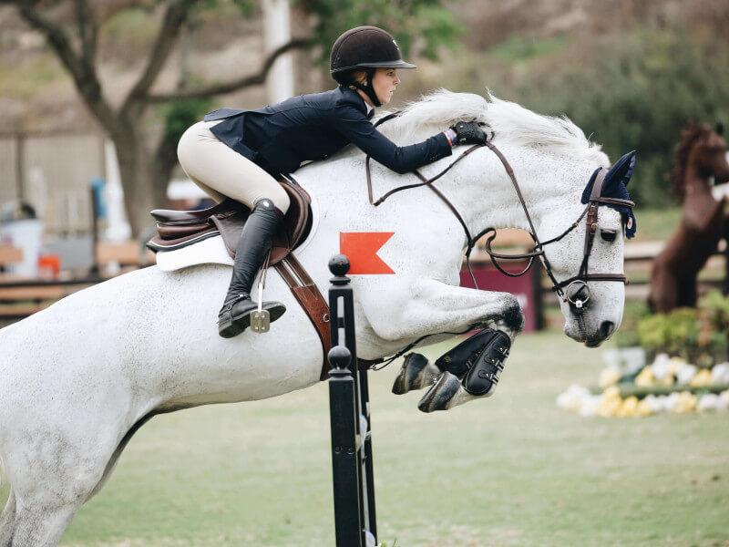 Sport & Leisure Horses