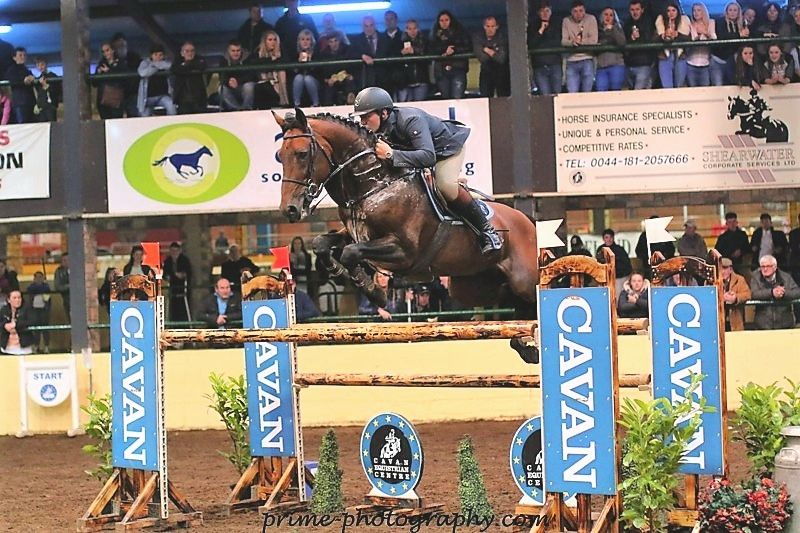 Premier Royal Sport Horsesales Ie