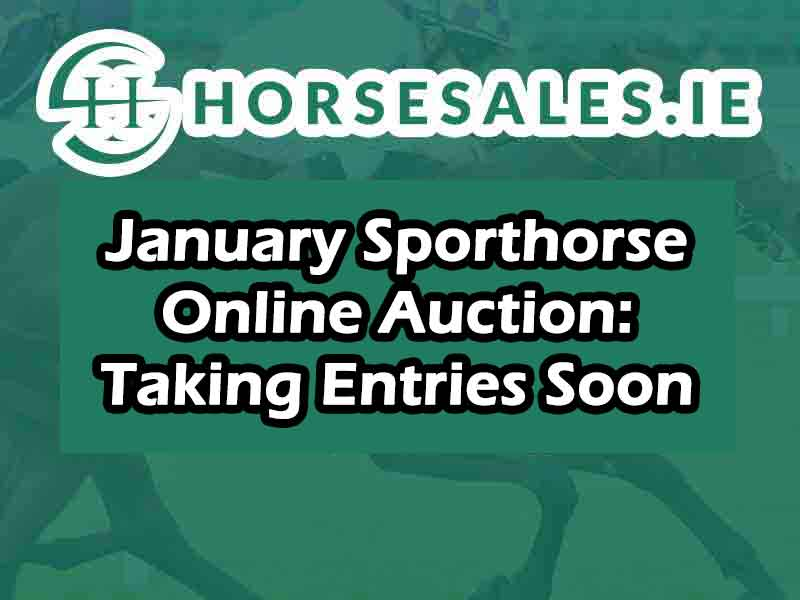 Jan Sporthorse Online Auction